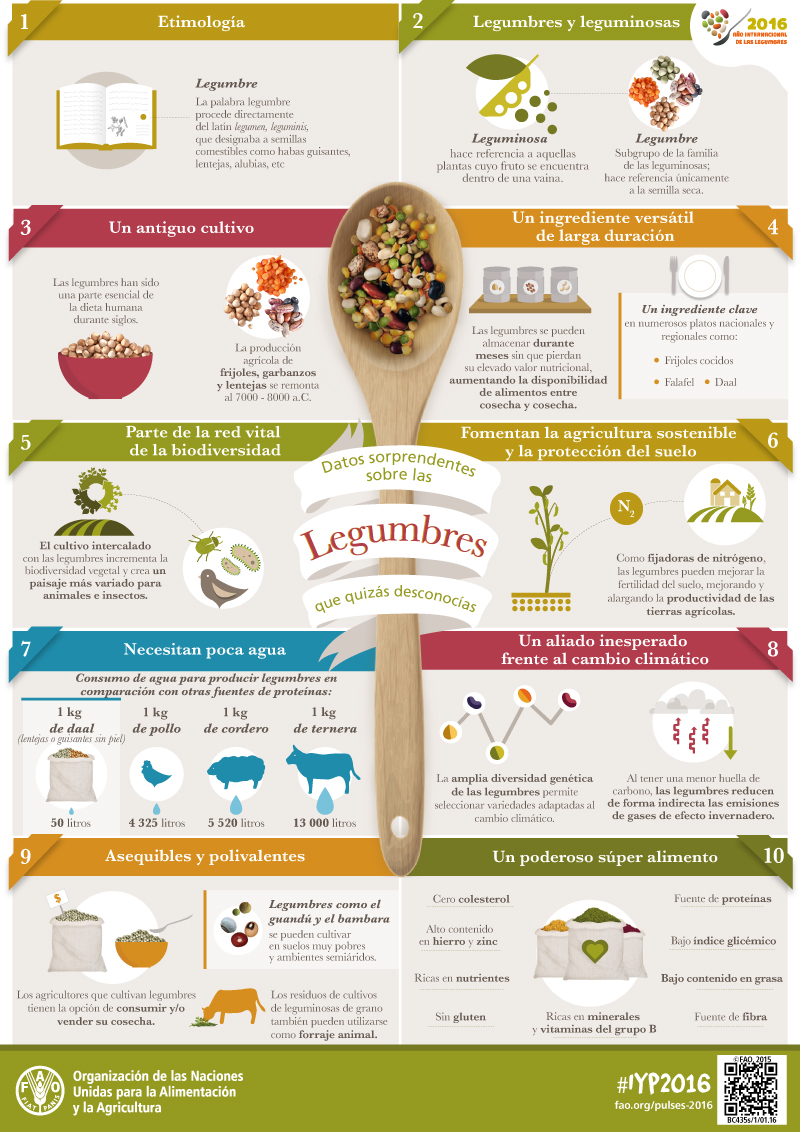 IYP-Pulses-Facts-infographic_es